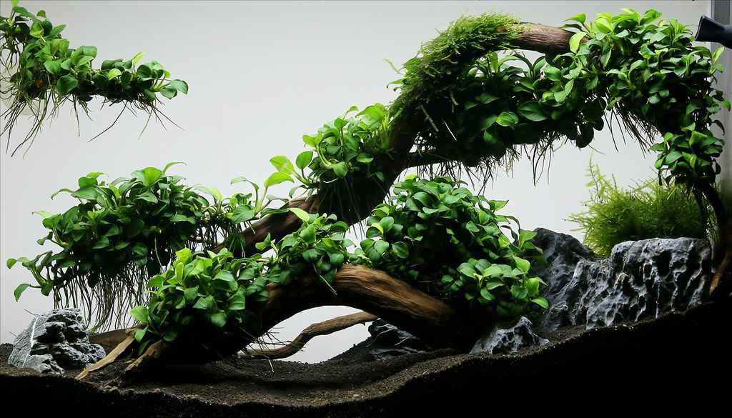 Bật đèn, chiếu sáng Rêu, ráy, dương xỉ
