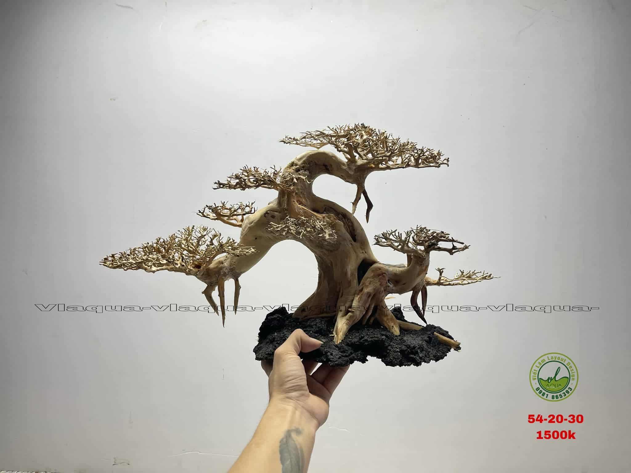 bonsai layout thủy sinh