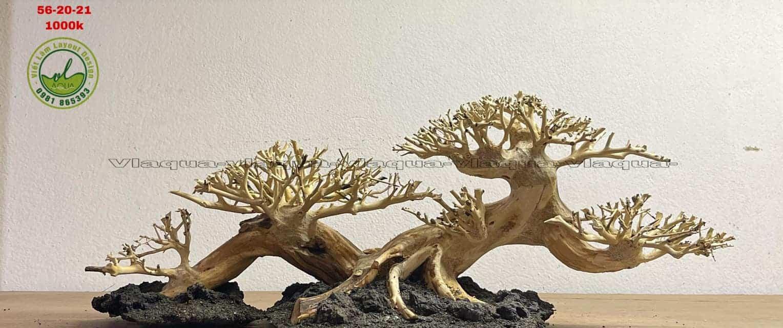 bonsai layout aquarium