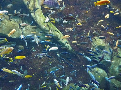 Thay nước bể cá
